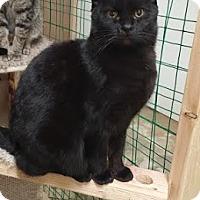 Adopt A Pet :: Linus - Fairbury, NE