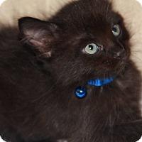 Adopt A Pet :: Einstein - Santa Rosa, CA