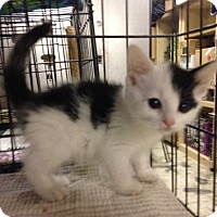Adopt A Pet :: Cheyanne - East Brunswick, NJ