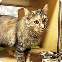 Adopt A Pet :: Sandy - Arlington/Ft Worth, TX