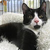 Adopt A Pet :: Bastelli - Voorhees, NJ
