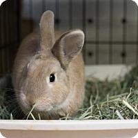 Adopt A Pet :: Parker - Holbrook, NY