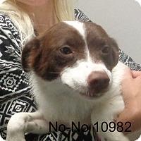 Adopt A Pet :: No No - baltimore, MD