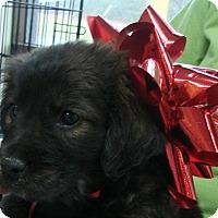 Adopt A Pet :: Chex - Erwin, TN