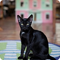 Adopt A Pet :: Bellatrix - Jacksonville, FL