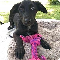 Adopt A Pet :: Regina (MD-Kelly) - Newark, DE