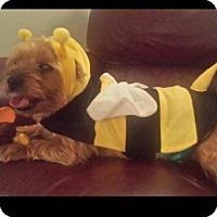 Adopt A Pet :: Jett - Willingboro, NJ