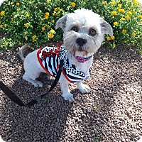 Adopt A Pet :: Lucy formerly Bidoff - Las Vegas, NV