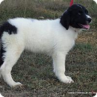 Adopt A Pet :: Jill/ADOPTED - PRINCETON, KY