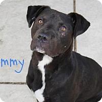 Adopt A Pet :: *TOMMY - Sacramento, CA