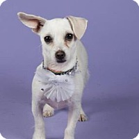 Adopt A Pet :: Evelyn - Irving, TX