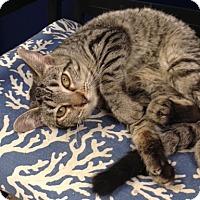 Adopt A Pet :: Dana - Georgetown, TX