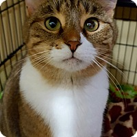 Adopt A Pet :: Avalon - Salisbury, MA