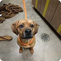 Adopt A Pet :: Sheila - Ottawa, KS