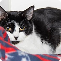 Adopt A Pet :: Millie - Lowell, MA