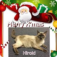 Adopt A Pet :: Hiroki - Harrisburg, NC