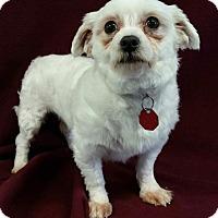 Adopt A Pet :: Juniper Miller - Urbana, OH
