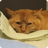 Adopt A Pet :: Fred - Naperville, IL