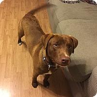 Adopt A Pet :: Jackson - Waynesboro, TN