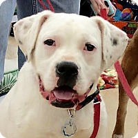 Adopt A Pet :: Andy - Maryville, TN