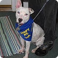 Adopt A Pet :: Jake - Knoxville, TN