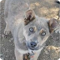 Adopt A Pet :: Natasha - dewey, AZ