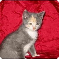 Adopt A Pet :: Harmony - Syracuse, NY