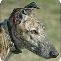 Adopt A Pet :: Brax - Rancho Santa Margarita, CA