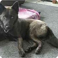 Adopt A Pet :: Victoria - Belleville, MI