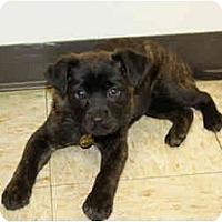 Adopt A Pet :: Kami - Racine, WI