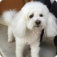 Adopt A Pet :: Princess - Van Nuys, CA