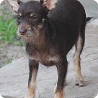 Adopt A Pet :: Frank-MeetHim-Fun/easygoing - Norwalk, CT