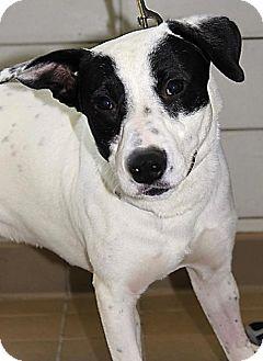 Labrador Retriever Mix Dog for adoption in New York, New York - Marley (Westhampton)