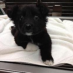 Photo 4 - Labrador Retriever/Golden Retriever Mix Dog for adoption in Fresno, California - Madison