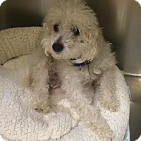 Adopt A Pet :: Trish - Oak Ridge, NJ