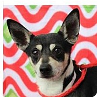 Adopt A Pet :: Milo-Low Fees/Neutered - Red Bluff, CA