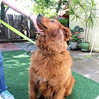 Adopt A Pet :: Copper - San Diego, CA