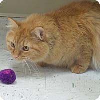 Adopt A Pet :: Joy - Chambersburg, PA