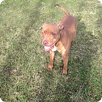 Adopt A Pet :: RILEY - Bolingbrook, IL