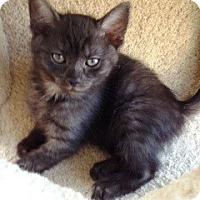 Adopt A Pet :: Kona - Orange, CA