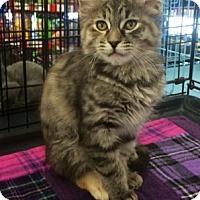 Adopt A Pet :: Mary Ann - Walnut Creek, CA