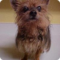 Adopt A Pet :: Dakota - 7 lbs - Dahlgren, VA