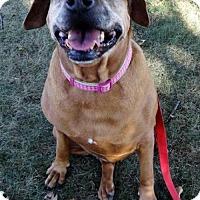Adopt A Pet :: Winnie - Waynesboro, PA