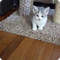 Adopt A Pet :: Darla - Statesville, NC