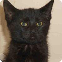 Adopt A Pet :: MARY JANE - Pittsburgh, PA