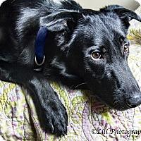 Adopt A Pet :: Czar - Warner Robins, GA