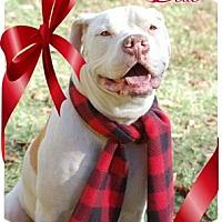 Adopt A Pet :: Belle - Garner, NC