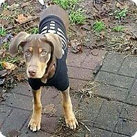 Adopt A Pet :: Twix - FOSTER HOME - Coldwater, MI