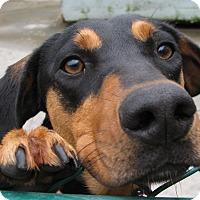Adopt A Pet :: Sheila - Groton, MA