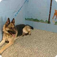 Adopt A Pet :: A500042 - San Bernardino, CA